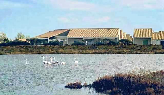 Flamingos vor dem Ferienhaus