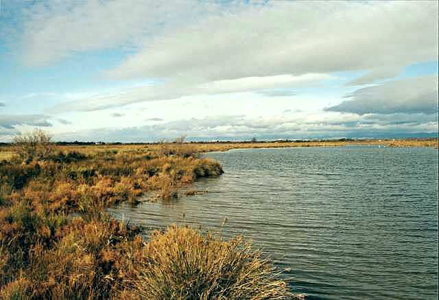 Lagune im Winter